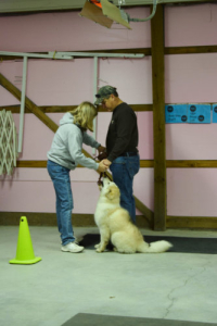 dog-training-kansas-city-northland-10