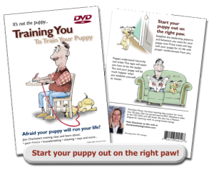 train-your-puppy-dvd-charlotte-the-dog-trainer